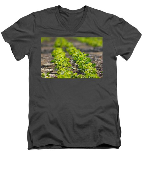 Agriculture- Soybeans 1 Men's V-Neck T-Shirt