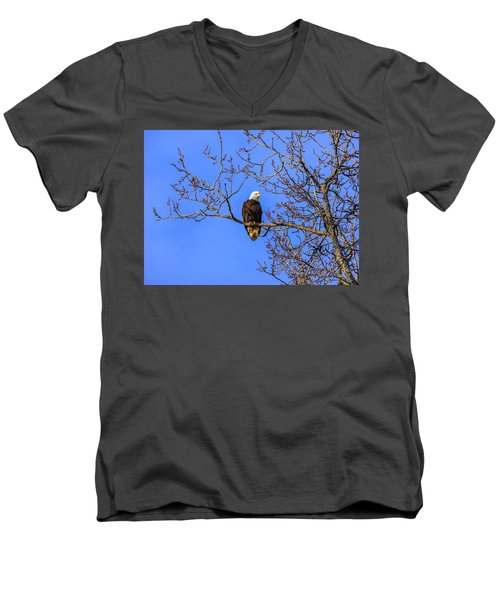 Alaskan Bald Eagle In Tree At Sunset Men's V-Neck T-Shirt