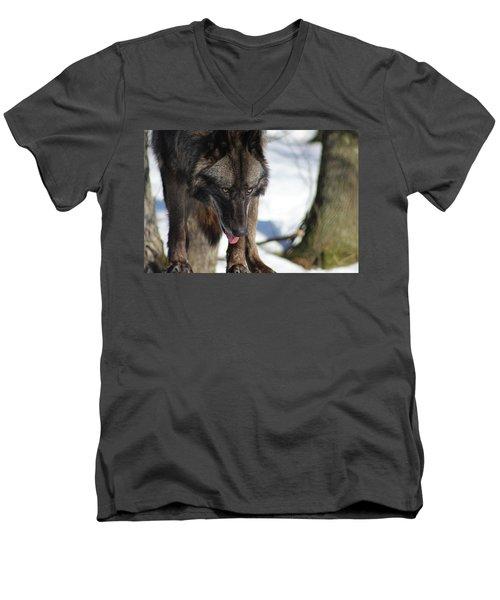 Alaskan Tundra Wolf Men's V-Neck T-Shirt