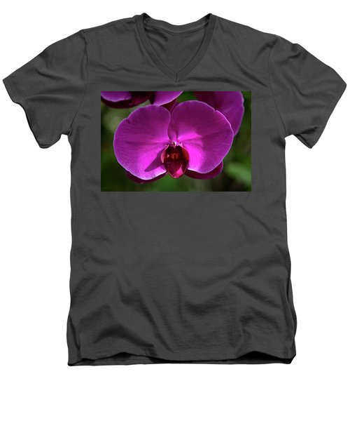 Allan Gardens Orchid Men's V-Neck T-Shirt