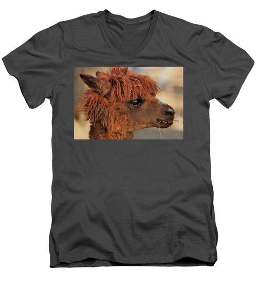 Alpaca Portrait Men's V-Neck T-Shirt by Sheila Brown