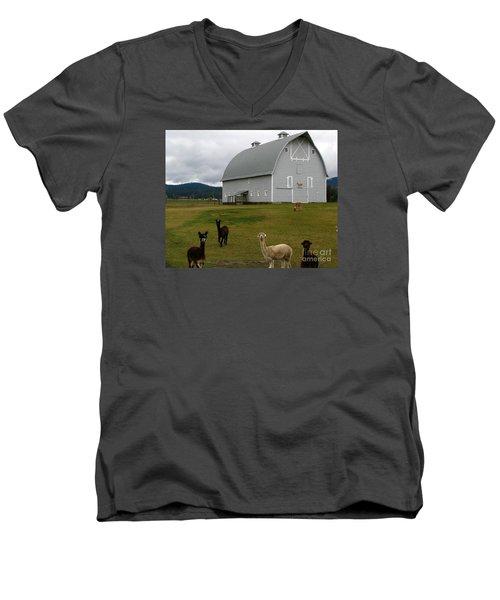 Alpacas Men's V-Neck T-Shirt by Greg Patzer