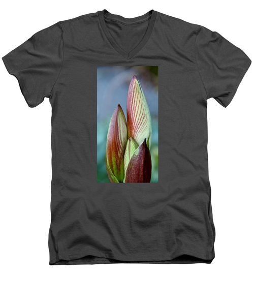 Men's V-Neck T-Shirt featuring the photograph Amaryllis Buds by Werner Lehmann