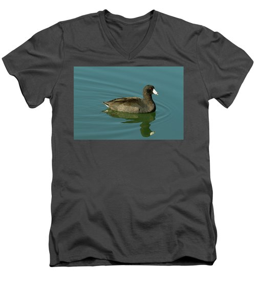 American Coot Men's V-Neck T-Shirt