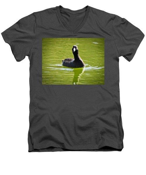 American Coot Portrait Men's V-Neck T-Shirt