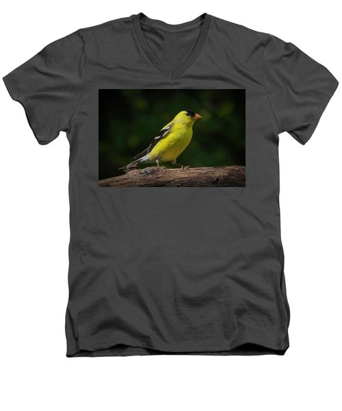 American Goldfinch Male Men's V-Neck T-Shirt by Kenneth Cole