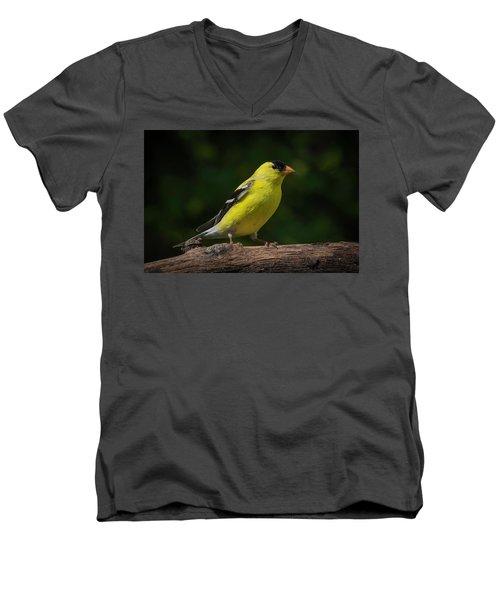 American Goldfinch Male Men's V-Neck T-Shirt