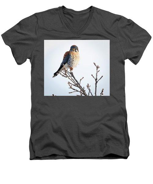 American Kestrel At Bender Men's V-Neck T-Shirt