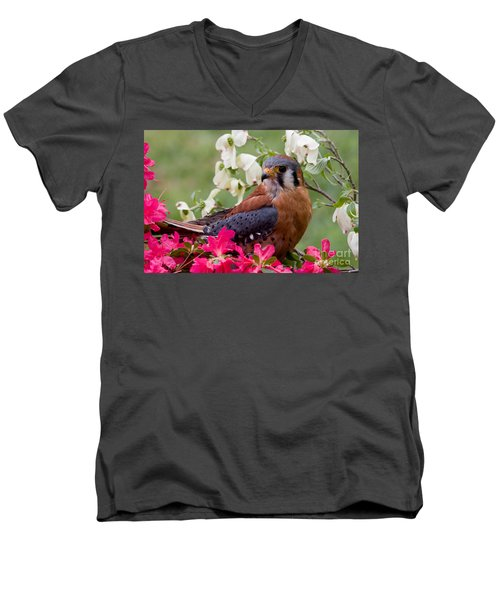 American Kestrel In The Springtime Men's V-Neck T-Shirt
