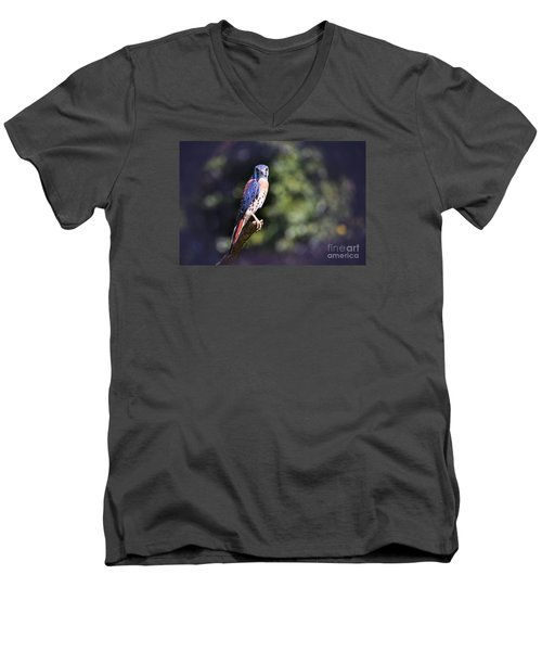 American Kestrel Men's V-Neck T-Shirt