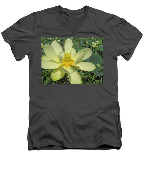 American Lotus Men's V-Neck T-Shirt
