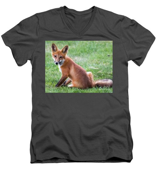 American Red Fox  Men's V-Neck T-Shirt