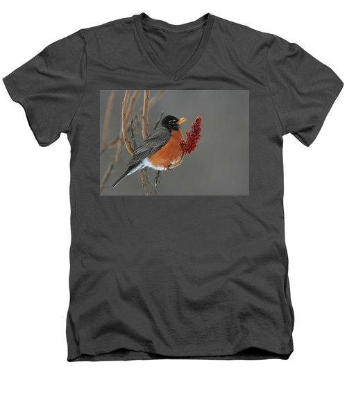American Robin On Sumac Men's V-Neck T-Shirt