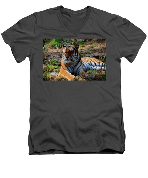 Men's V-Neck T-Shirt featuring the mixed media Amur Tiger 8 by Angelina Vick