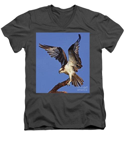 Angel Osprey Men's V-Neck T-Shirt