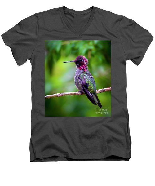 Anna Humming Bird Men's V-Neck T-Shirt