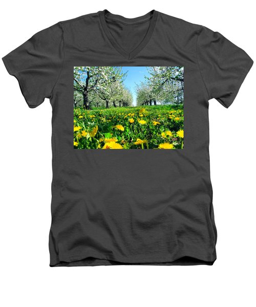 Apple Orchard, Nova Scotia, Annapolis Valley Men's V-Neck T-Shirt