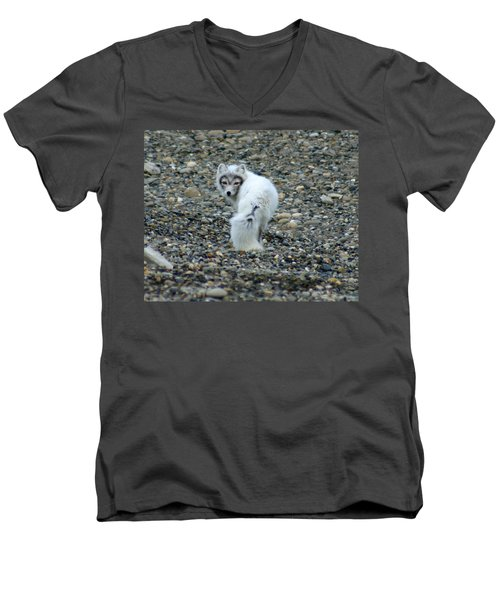 Arctic Fox Men's V-Neck T-Shirt