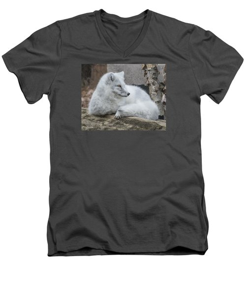 Arctic Fox Profile Men's V-Neck T-Shirt