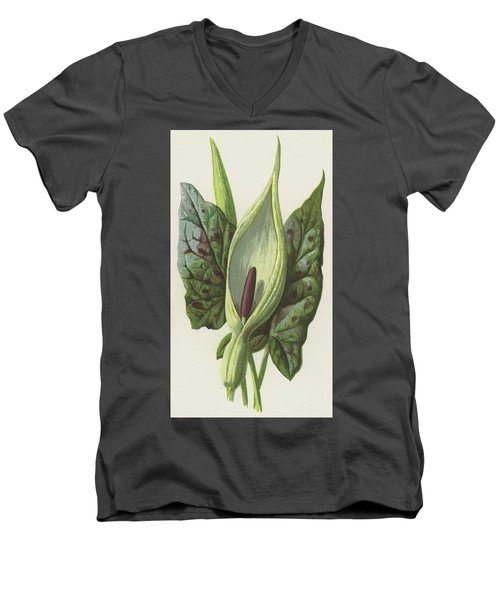 Arum, Cuckoo Pint Men's V-Neck T-Shirt by Frederick Edward Hulme