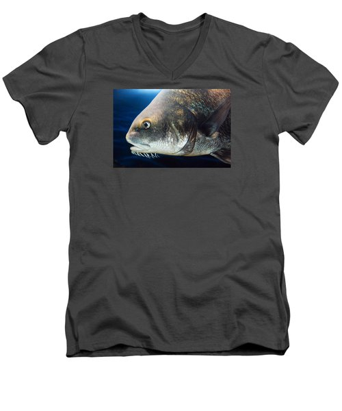 Atlantic Cod Men's V-Neck T-Shirt by James Kirkikis