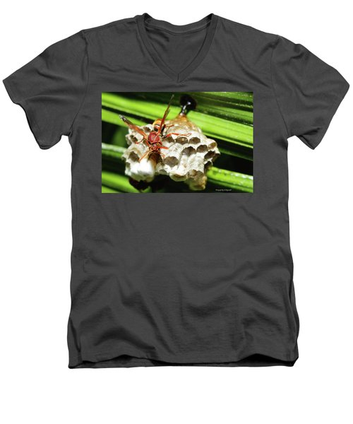 Australian Papper Wasp 772 Men's V-Neck T-Shirt