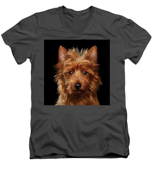 Australian Terrier Men's V-Neck T-Shirt by Sergey Taran