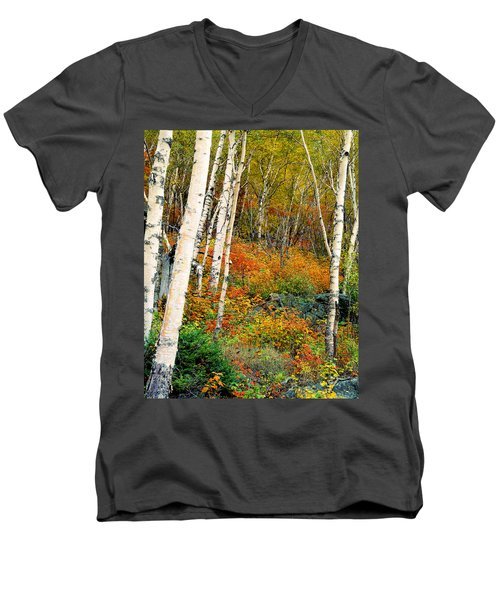 Autumn Birch Men's V-Neck T-Shirt
