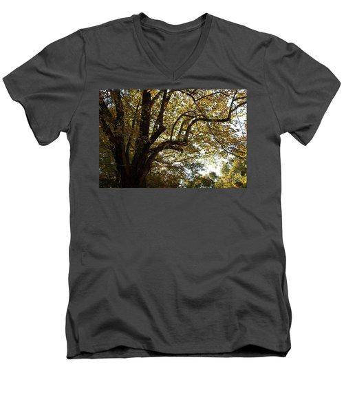 Autumn Branches Men's V-Neck T-Shirt