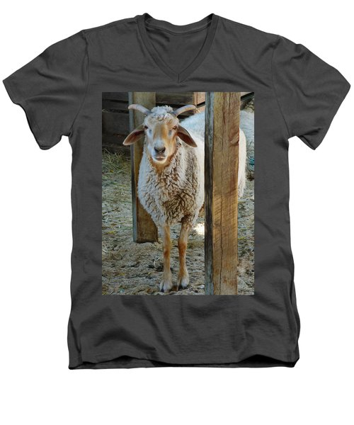 Awassi Sheep Men's V-Neck T-Shirt
