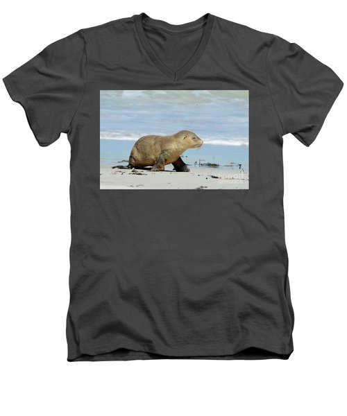 Baby Sea Lion On Seals Bay Men's V-Neck T-Shirt