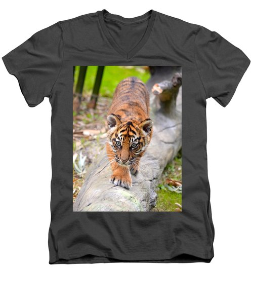 Baby Sumatran Tiger Cub Men's V-Neck T-Shirt by Richard Bryce and Family