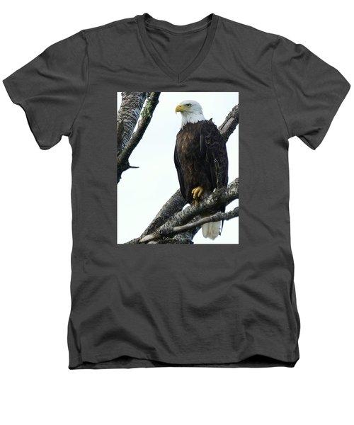 Bald Eagle 4 Men's V-Neck T-Shirt by Steven Clipperton
