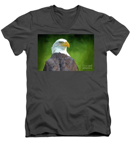 Bald Eagle Men's V-Neck T-Shirt by Franziskus Pfleghart