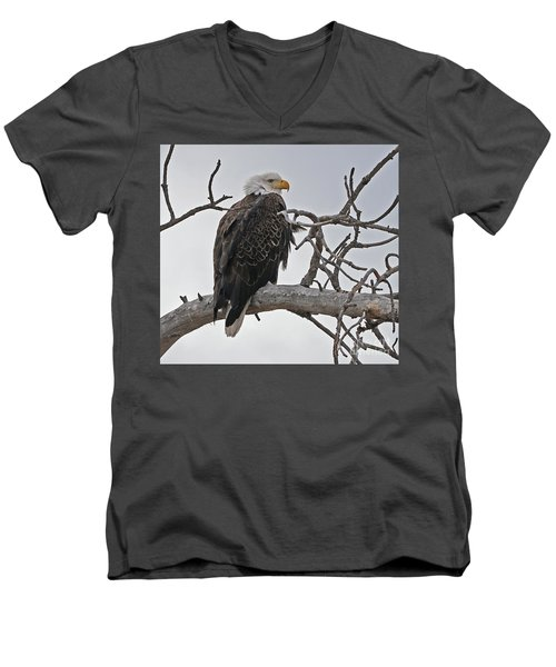 Men's V-Neck T-Shirt featuring the photograph Bald Eagle In Profile by Bill Gabbert