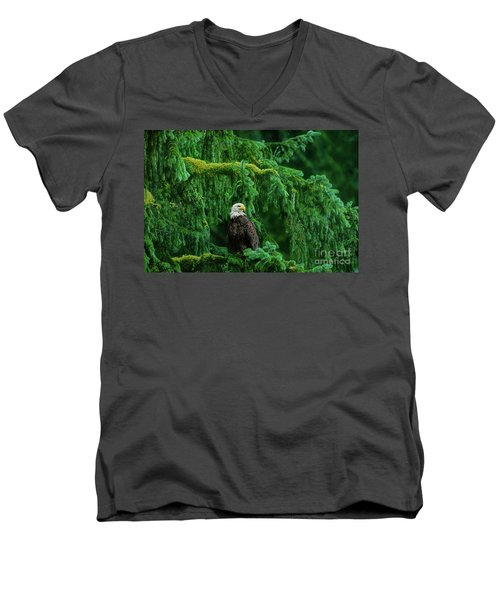 Men's V-Neck T-Shirt featuring the photograph Bald Eagle In Temperate Rainforest Alaska Endangered Species by Dave Welling