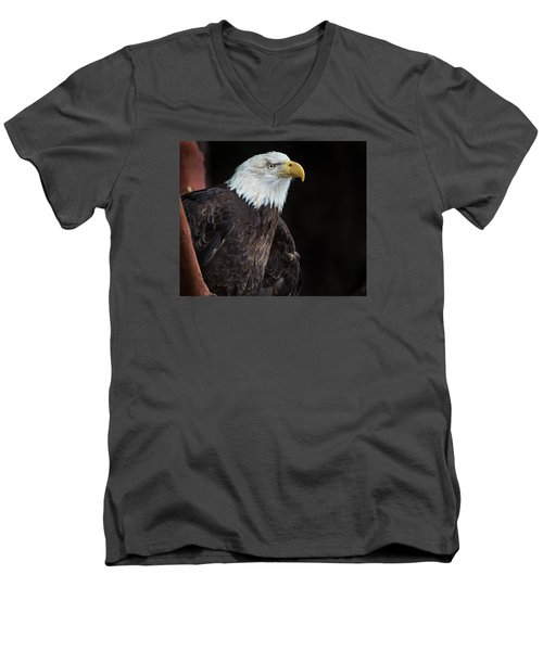 Bald Eagle Intensity Men's V-Neck T-Shirt by Greg Nyquist