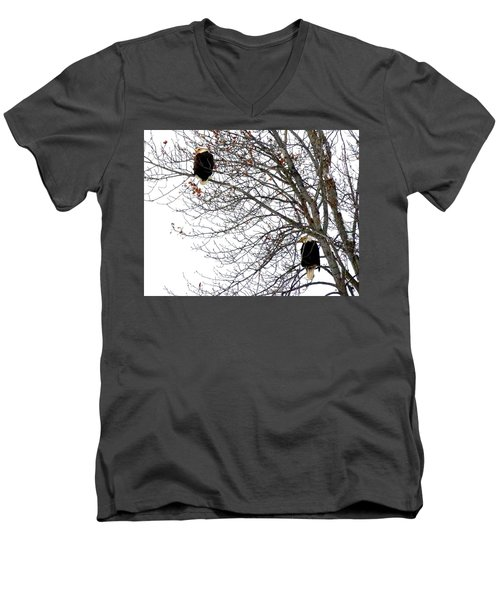 Bald Eagle Pair Men's V-Neck T-Shirt by Will Borden