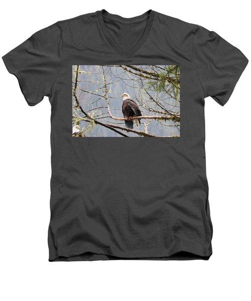 Bald Eagle Resting Men's V-Neck T-Shirt