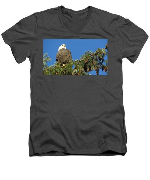 Bald Eagle Sunbathing Men's V-Neck T-Shirt