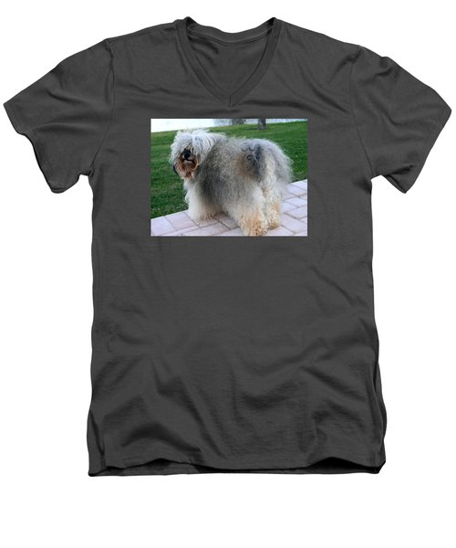 ball of fur Havanese dog Men's V-Neck T-Shirt by Sally Weigand