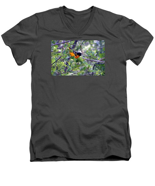 Baltimore Northern Oriole Men's V-Neck T-Shirt