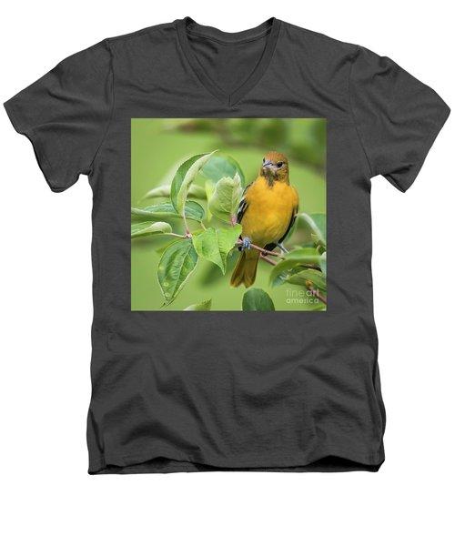 Baltimore Oriole Closeup Men's V-Neck T-Shirt