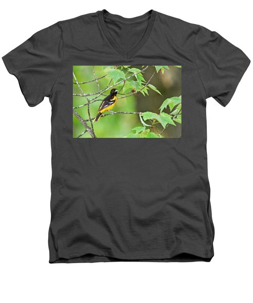 Baltimore Oriole Men's V-Neck T-Shirt by Michael Peychich