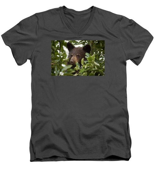 Bear Cub In Apple Tree6 Men's V-Neck T-Shirt