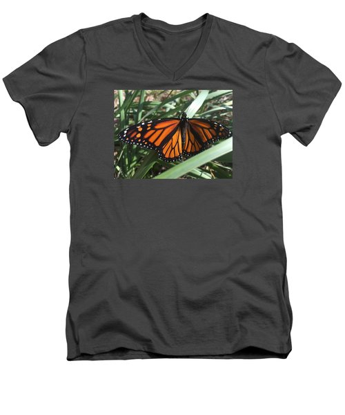 Men's V-Neck T-Shirt featuring the photograph Beautiful Fall Butterfly  by Paula Brown