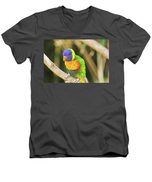 Beautiful Perched Mccaw On A Branch. Men's V-Neck T-Shirt