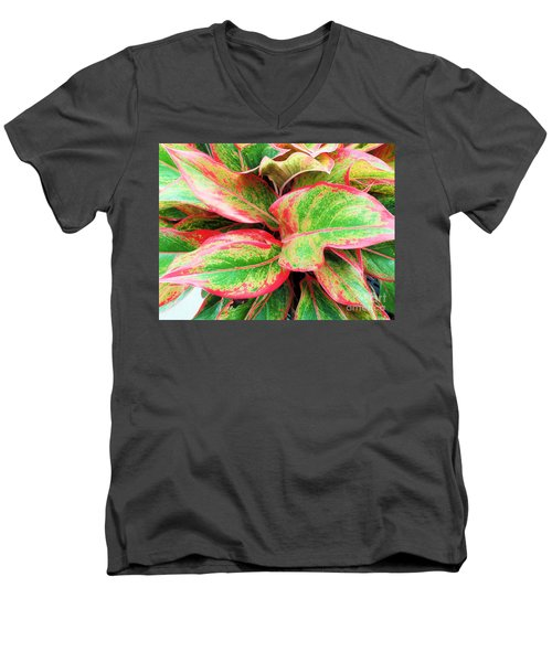 Men's V-Neck T-Shirt featuring the photograph Beautiful Red Aglaonema by Ray Shrewsberry