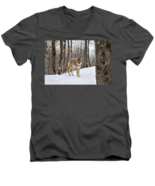Beauty Of The Woods Men's V-Neck T-Shirt