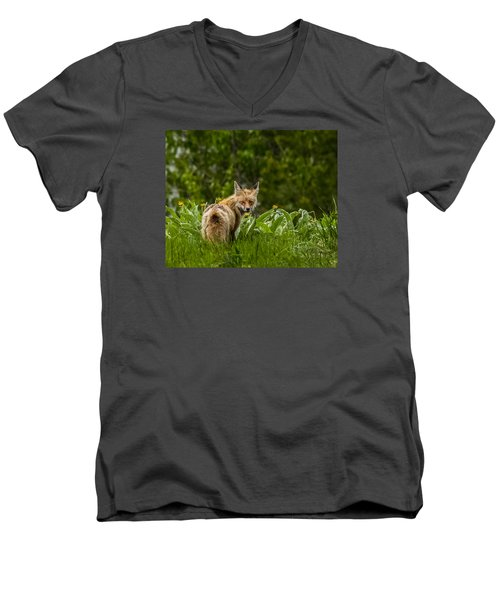 Men's V-Neck T-Shirt featuring the photograph Beaver Creek Mama Fox In Spring by Yeates Photography